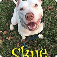 Adopt A Pet :: Skye - Cantonment, FL