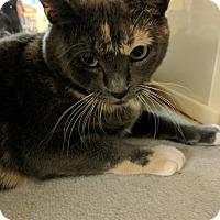 Adopt A Pet :: Clea - El Cajon, CA