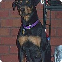 Adopt A Pet :: Gabi - New Richmond, OH