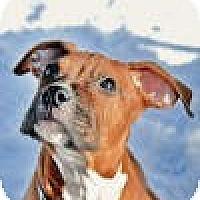 Adopt A Pet :: Zeus - Sunderland, MA