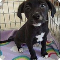 Adopt A Pet :: Venice - Phoenix, AZ
