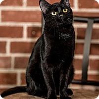 Adopt A Pet :: Canasta - St. Louis, MO
