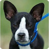 Adopt A Pet :: Reba - Providence, RI