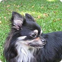 Adopt A Pet :: Romeo - Villa Rica, GA