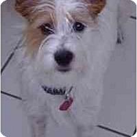 Adopt A Pet :: Shelby - Miami, FL