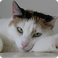 Adopt A Pet :: CALLIOPE - Huntington Station, NY