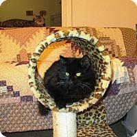Adopt A Pet :: Zander - Speonk, NY