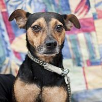 Adopt A Pet :: Bosco - Tanner, AL