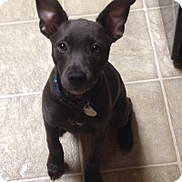 Adopt A Pet :: Anja - Marietta, GA