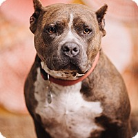 Adopt A Pet :: Annabelle - Portland, OR