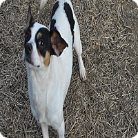 Adopt A Pet :: JT in CT - East Hartford, CT