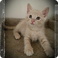 Adopt A Pet :: Dustin - Richmond, VA