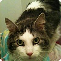 Adopt A Pet :: Maxwell - Richmond Hill, ON