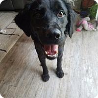 Adopt A Pet :: Jason - Richmond, VA