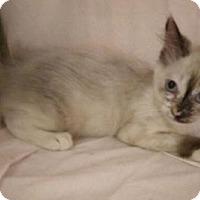 Adopt A Pet :: Bella - Fullerton, CA