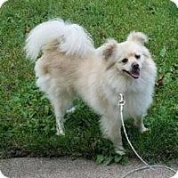 Adopt A Pet :: Alpha - Mount Ayr, IA
