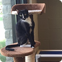 Adopt A Pet :: Chelsea - Hickory Creek, TX