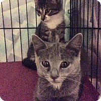 Adopt A Pet :: Marie - Brooklyn, NY