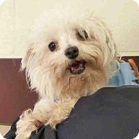 Adopt A Pet :: CHLOE - Fort Wayne, IN