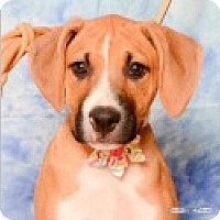 Adopt A Pet :: Heidi - Pittsboro, NC