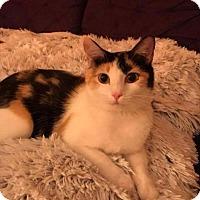 Adopt A Pet :: Hazel - Fenton, MO