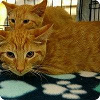 Adopt A Pet :: Kennedy and Kendra - Randolph, NJ