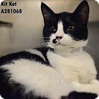 Adopt A Pet :: KIT KAT - Conroe, TX