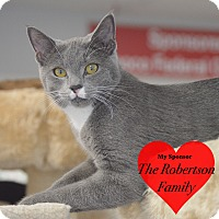Domestic Shorthair Kitten for adoption in San Leon, Texas - Leonardo