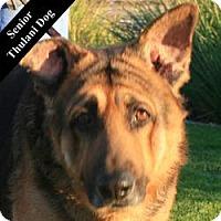 Adopt A Pet :: Penn T. - Cupertino, CA