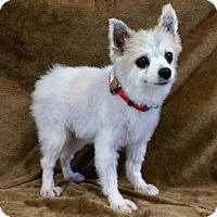 Adopt A Pet :: Danni Miller - Urbana, OH