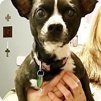 Adopt A Pet :: Paige - Charlotte, NC