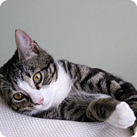 Adopt A Pet :: Lex - Potomac, MD
