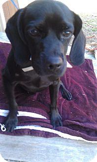 Terrier (Unknown Type, Medium) Mix Dog for adoption in Waldorf, Maryland - Jamie #365