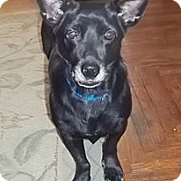 Adopt A Pet :: Nomie reduced to 300$ - Spring Valley, NY