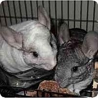 Adopt A Pet :: S1 Abby & S2 Lola - Avondale, LA