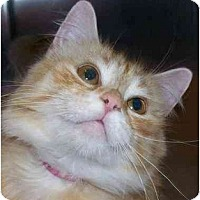 Adopt A Pet :: Alexa - Annapolis, MD