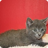Adopt A Pet :: LAURA - SILVER SPRING, MD