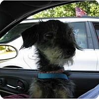 Adopt A Pet :: Pepper Ann - Philadelphia, PA