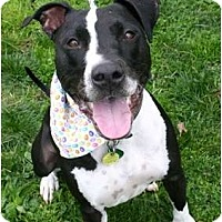 Adopt A Pet :: Pixi - Auburn, CA