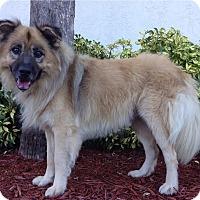 Adopt A Pet :: Teddy - Ocean Ridge, FL