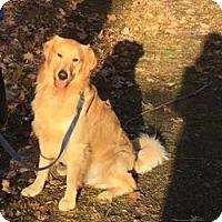 Adopt A Pet :: Champ - Nanuet, NY