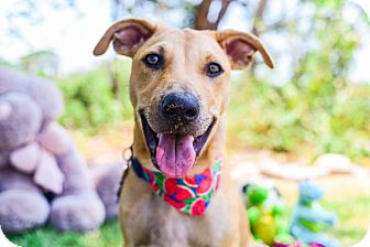 Search And Rescue Dog Training Victoria Bc