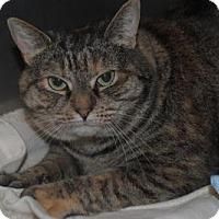 Adopt A Pet :: Cali - Lafayette, NJ