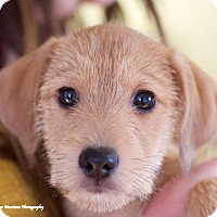Adopt A Pet :: Skippy Jon - Knoxville, TN