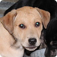 Adopt A Pet :: Yelp - Harmony, Glocester, RI