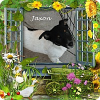 Adopt A Pet :: Jaxson - Crowley, LA