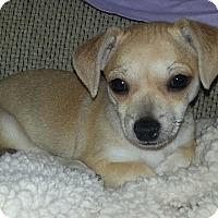 Adopt A Pet :: Lady Bug - San Diego, CA