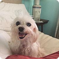 Adopt A Pet :: Esme - Los Angeles, CA