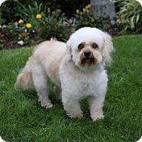 Adopt A Pet :: GARRETT - Newport Beach, CA
