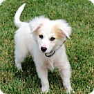 Adopt A Pet :: PUPPY POLAR